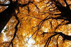 Schöne Herbstlandschaft Laoshan-Berges von China Stockbild