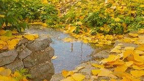 Schöne Herbstlandschaft mit Baumgelb lässt das Fließen auf einem Teich stock video footage