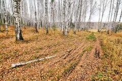 Schöne Herbstlandschaft mit einer Landstraße bedeckt mit gefallenen gelben Blättern lizenzfreies stockfoto