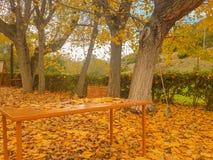 Schöne Herbstlandschaft mit fallenden Blättern der Bäume Lizenzfreie Stockfotos