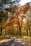 Schöne Herbstlandschaft - parken Sie, gelb gefärbte Bäume glänzen im Sonnenschein stockfotografie