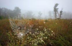Schöne Herbstlandschaft Spinnennetz stockbild