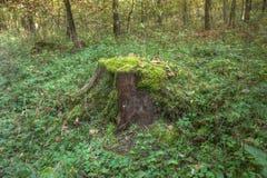 Schöne Herbstnatur Lizenzfreie Stockfotografie