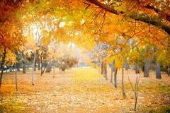 Schöne Herbstniederlassungen von Bäumen im Spätholz, Herbsthintergrund Lizenzfreies Stockfoto