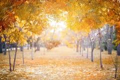 Schöne Herbstniederlassungen von Bäumen im Spätholz, Herbsthintergrund Stockfotos