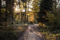 Schöne Herbstszene, bunter Wald in den Bergen Stockbild