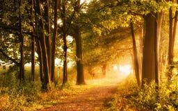 Schöne Herbstszene lädt zu einem Weg ein Stockfotos
