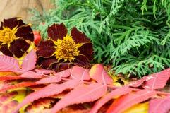 Schöne Herbstzusammensetzung auf hölzernem Hintergrund Stockfotografie