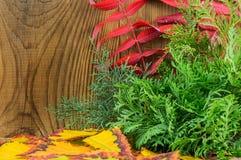 Schöne Herbstzusammensetzung auf hölzernem Hintergrund Lizenzfreie Stockbilder