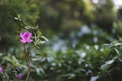 Schöne hochrote Blume auf der Niederlassung auf dem Hintergrund Bushs Bush der reichen grünen Farbe Stockfotografie