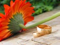 Schöne Hochzeitsringe Lizenzfreies Stockfoto
