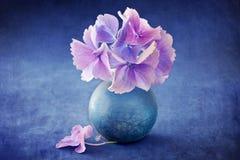 Schöne Hydrangeablumen Stockfotos