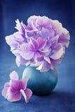 Schöne Hydrangeablumen Stockfoto