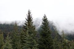 Schöne immergrüne Fichte und Schnee-mit einer Kappe bedeckte Waldspitzen stockfotos