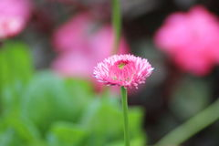 Schöne indische Blume Stockfotografie
