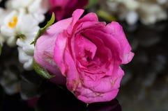 Schöne Jasmingirlande von Blumen mit Rosarose Lizenzfreie Stockfotografie
