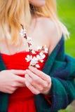 Schöne junge blonde Frau im roten Kleid, das blühendes aprico hält Stockbilder