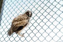 Schöne junge Eule, die auf dem Gitter sitzt stockbild