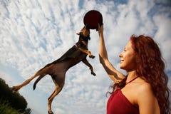 Lustiger springender Hund Stockfoto