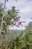 Schöne junge Frau an einem Pool Glückliche junge Frau im weißen Kleid und im Hut, die an der Palmenwaldung schwingt lizenzfreies stockfoto