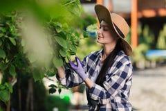 Schöne junge Frau im karierten Hemd und im Strohhut draußen im Garten arbeitend am Sommertag stockbild