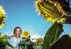 Schöne junge Frau im Sonnenblumenfeld, natürliche saisonalszene Stockfotografie