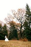 Schöne junge Hochzeitspaare stehen zusammen im Park glücklich Lizenzfreie Stockfotos