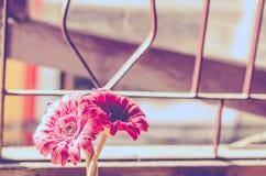 Schöne künstliche Blumen auf hölzernem Hintergrund: Weinleseton stockfotos