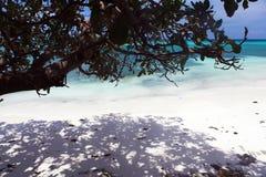 Schöne Küstenlinie, Türkisansicht des Meeres mit tropischem Baum Stockfotografie