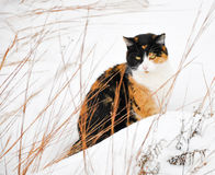 Schöne Kalikokatze im Schnee Stockfotos