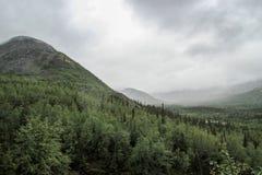 Schöne kalte Nordnatur: Bäume und Felsen unter schwerem bewölktem Himmel stockbilder