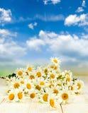 Schöne Kamille blüht auf einem hölzernen Brett gegen den Himmel Stockfotos