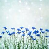 Schöne Karte für Einladung, Glückwunsch mit Blumen cornf Stockfoto