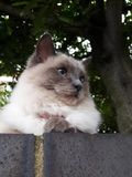 Schöne Katze Lizenzfreie Stockbilder