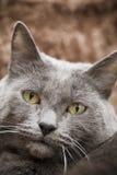 Schöne Katze Lizenzfreies Stockbild