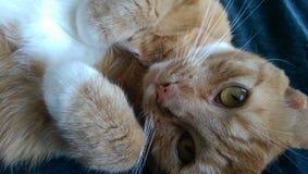 Schöne Katze Lizenzfreies Stockfoto