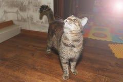 Schöne Katze auf dem Bretterboden Stockbild