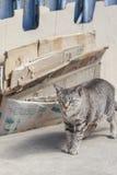 Schöne Katze auf der Straße Lizenzfreies Stockfoto