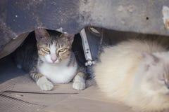 Schöne Katze auf der Straße Stockfotos