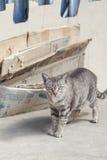 Schöne Katze auf der Straße Stockbilder
