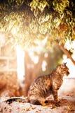 Schöne Katze der getigerten Katze, die unter dem Baum sitzt Stockbilder