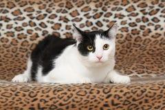 Schöne Katze, die auf Decke liegt Lizenzfreies Stockfoto