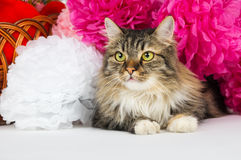 Schöne Katze, die auf dem Hintergrund von hellen Papierblumen liegt Stockbilder