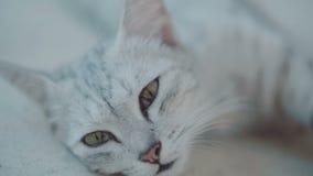 Schöne Katze, die auf der Terrasse sich entspannt stock video footage