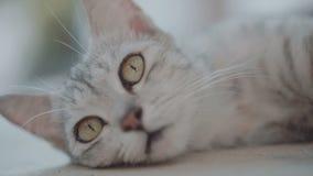Schöne Katze, die auf der Terrasse sich entspannt stock video