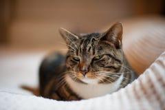 Schöne Katze, die auf einer weißen Decke stillsteht lizenzfreies stockfoto
