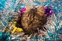 Schöne Katze, die heraus Lametta schaut Stockbild