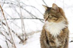 Schöne Katze, die im Schnee sitzt Lizenzfreie Stockfotografie