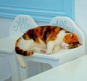 Schöne Katze, die in Santorini, Griechenland sich entspannt lizenzfreie stockfotografie