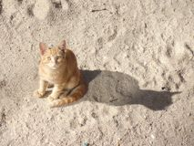 Schöne Katze, die Sie betrachtet lizenzfreie stockfotos